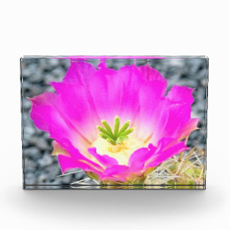 Bloque de la foto con las flores