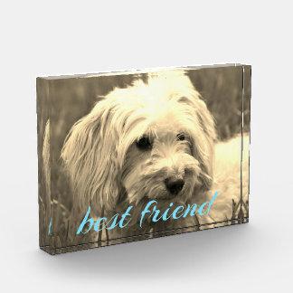 Bloque de la foto del perro del mejor amigo