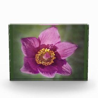 Bloques de la foto con las flores