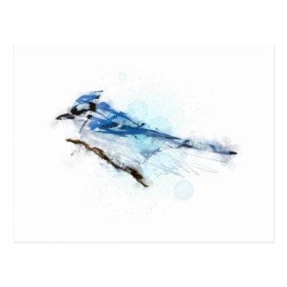 Blue Jay BIRD - Arrendajo Azul Postal