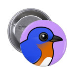 Bluebird del este lindo pin