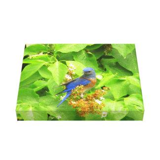 Bluebird en el seto de la lila lienzo