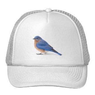 Bluebird Gorros