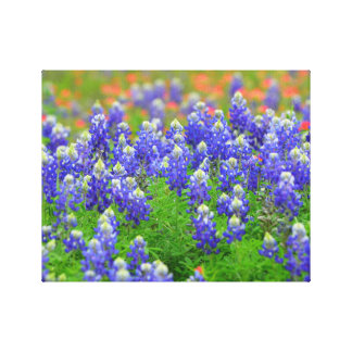 Bluebonnets de la primavera impresión en lienzo