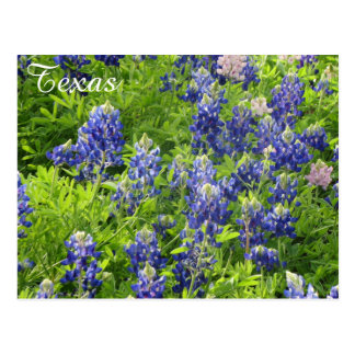 Bluebonnets de Postal-Tejas del Wildflower de Postal