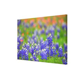 Bluebonnets suaves del foco impresión en lienzo