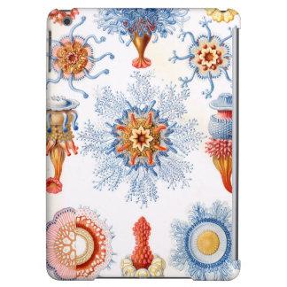 ¡Bluebottle de las medusas de Ernst Haeckel