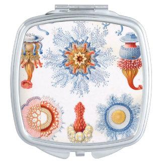 ¡Bluebottle de las medusas de Ernst Haeckel Espejo Compacto