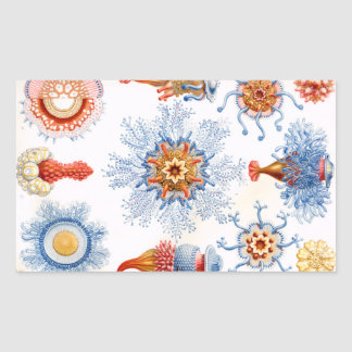 ¡Bluebottle de las medusas de Ernst Haeckel Pegatina Rectangular
