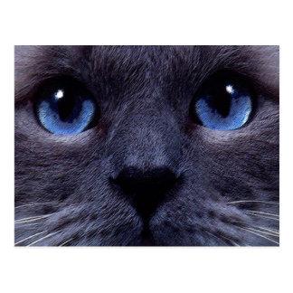 blueyes tarjetas postales