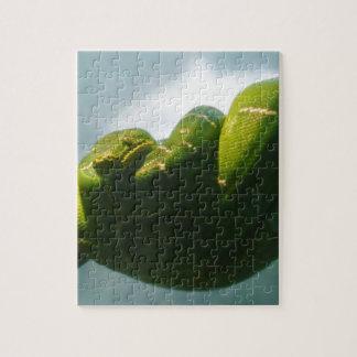 Boa verde del árbol puzzle