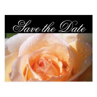Boda color de rosa Sunlit Postal