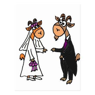 Boda divertido de la cabra de novia y del novio postal
