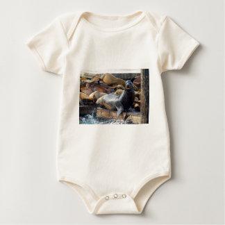 Body Para Bebé Leones marinos en el dique flotante en San