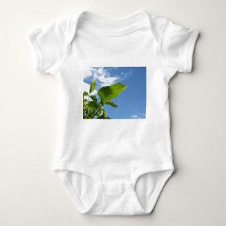 Body Para Bebé Primer de la hoja de la nuez encendido por la luz