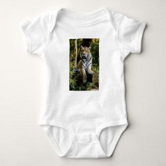 Body Para Bebé Tigre de los alquileres en Muenster