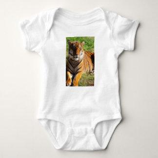 Body Para Bebé Tigre malayo de los alquileres