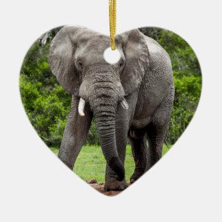 Boletín solitario del elefante africano ornamentos de reyes
