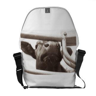 Bolsa De Mensajería Vaca Nosey