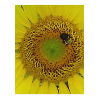 Bonito de la abeja del girasol tarjeton