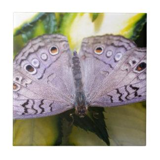 Bonito en púrpura azulejo cerámica