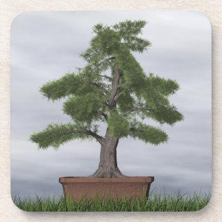 Bonsais del árbol del enebro del templo - 3D Portavasos