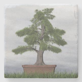 Bonsais del árbol del enebro del templo - 3D Posavasos De Piedra