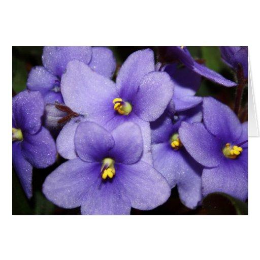 Boquet violeta felicitacion