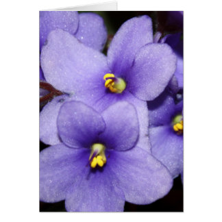 Boquet violeta tarjetón