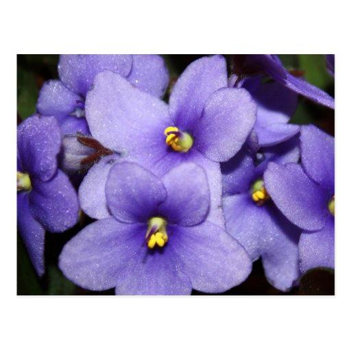 Boquet violeta tarjetas postales