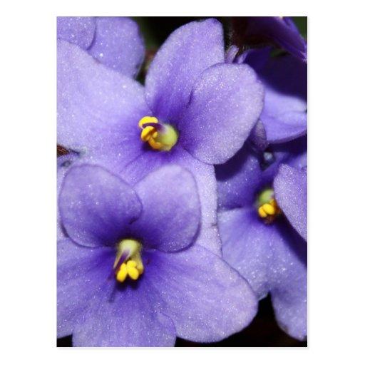 Boquet violeta tarjeta postal