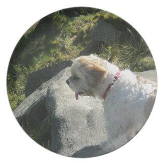 Borde del acantilado del perro de Ollie Plato Para Fiesta