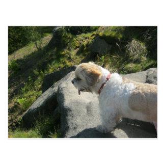 Borde del acantilado del perro de Ollie Postal