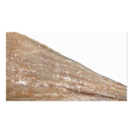 Borde del Seashell. Ciérrese encima de cuadro Tarjetas De Visita