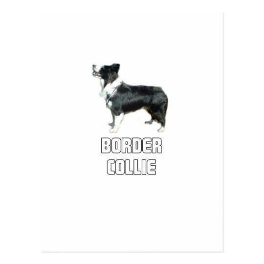 Border collie postal