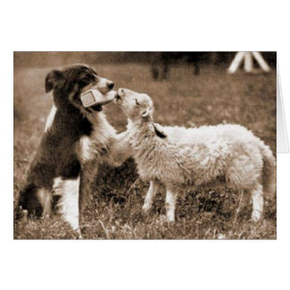 Border collie y tarjeta de Lamb~Photo