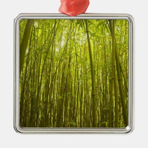 Bosque de bambú cerca del rastro de Waikamoi Ridge Adorno De Navidad