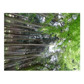 bosque de Kyoto de la visión impresionante Postal