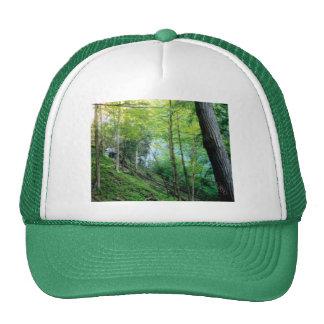 Bosque de la ladera gorra