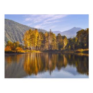 Bosque encantado en otoño postal