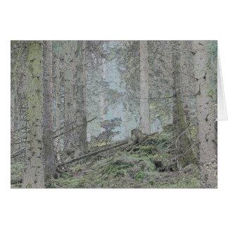 Bosque Spruce Tarjeta De Felicitación