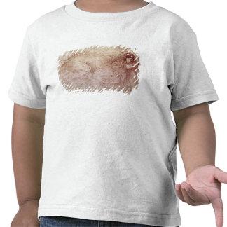 Bosquejo de un león del rugido camiseta