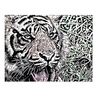bosquejo del tigre postal