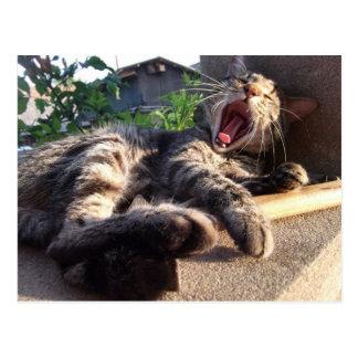 Bostezos del gatito postal
