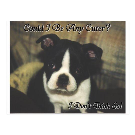 Boston Terrier:  ¿Podría ser más lindo? Postal