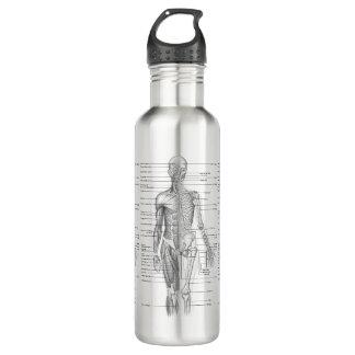 Botella De Agua Anatomía humana