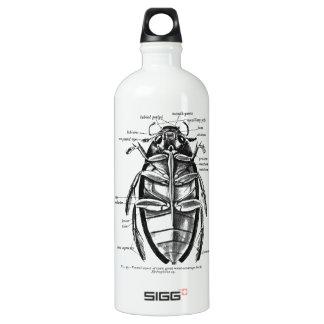 Botella De Agua Escarabajo del limpiador de Hydrophilidae de la