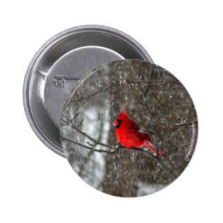 botón con la foto del cardenal de sexo masculino