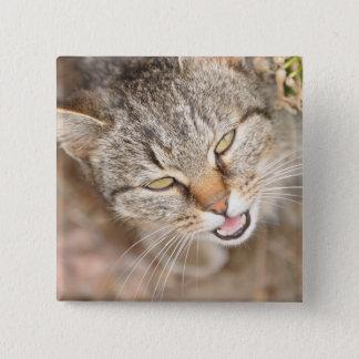 Botón - cuadrado ofreciendo este gatito dulce