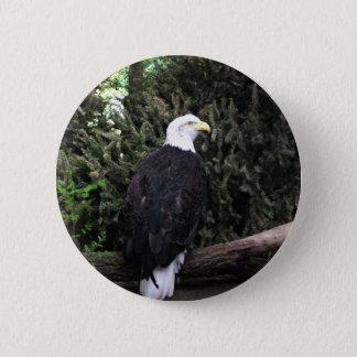 Botón de Eagle calvo